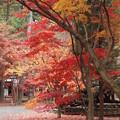 写真: 平林寺の中庭