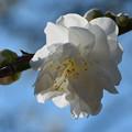 青空と白い花