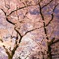 Photos: 春の夜の指定席