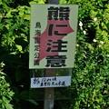 Photos: 鳥海ブルーライン 2016-09-03_30