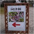Photos: 2017030701