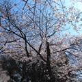 Photos: やっと咲いた