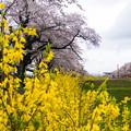 大河原ひと目千本桜-06366