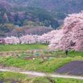 大河原ひと目千本桜-06342