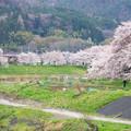 Photos: 大河原ひと目千本桜-06341