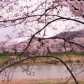 写真: 大河原ひと目千本桜-06387