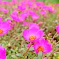 Photos: 咲き乱れる