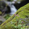 阿弥陀ヶの滝26