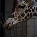 天王寺動物園21