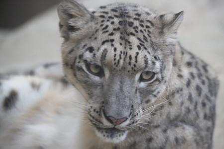 王子動物園12