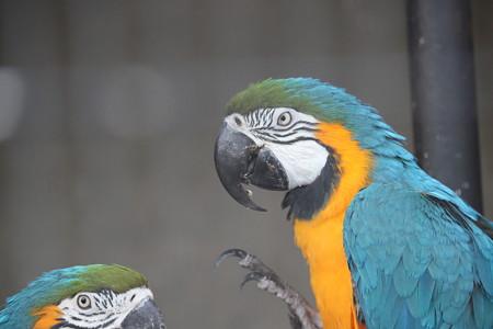 王子動物園17