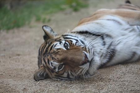 王子動物園14