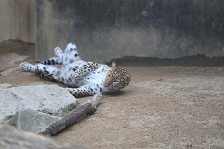 王子動物園16