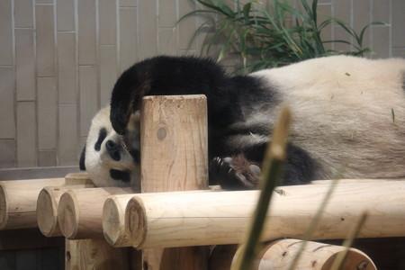 上野動物園16