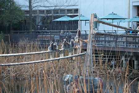 上野動物園91
