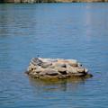 写真: 木曽川沿いに点在する人工物と、その上で休む鳥 - 2