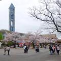 写真: 春の東山動植物園 No - 004:満開の桜と東山スカイタワー(2015/4/4)
