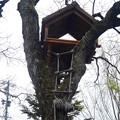 写真: 春の東山動植物園 No - 024:ゾージアム(新アジアゾウ舎)の前にある木に…鳥小屋?