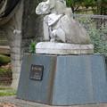 写真: 春の東山動植物園 No - 040:トリケラトプスの…子供?