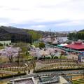 写真: 春の東山動植物園 No - 073:バラ園の展望台から見た景色(2015/4/4)