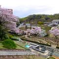 写真: 春の東山動植物園 No - 079:バラ園の展望台から見た景色(2015/4/4)
