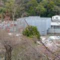 写真: 春の東山動植物園 No - 081:工事中の植物園温室(2015/4/4)
