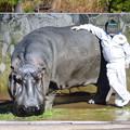 Photos: 春の東山動植物園 No - 121:カバの顔出し看板
