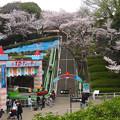 写真: 春の東山動植物園 No - 130:50周年を迎えた「スロープシューター」(2015/4/4)