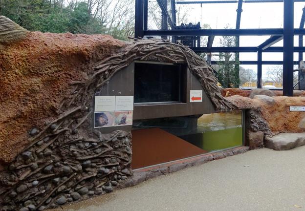 春の東山動植物園 No - 166:新しいビーバー舎