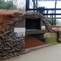 写真: 春の東山動植物園 No - 166:新しいビーバー舎