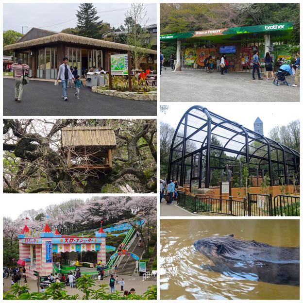 東山動植物園:施設のリニューアル、他 - 2