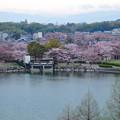 Photos: 桜の時期、水の塔から見下ろした落合公園(2015/4/7)No - 09