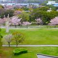 Photos: 桜の時期、水の塔から見下ろした落合公園(2015/4/7)No - 11