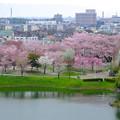 Photos: 桜の時期、水の塔から見下ろした落合公園(2015/4/7)No - 13