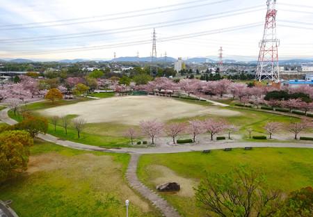 桜の時期、水の塔から見下ろした落合公園(2015/4/7)No - 17