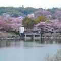 Photos: 桜の時期、水の塔から見下ろした落合公園(2015/4/7)No - 21