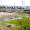Photos: 桜の時期、水の塔から見下ろした落合公園(2015/4/7)No - 27