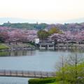 Photos: 桜の時期、水の塔から見下ろした落合公園(2015/4/7)No - 28