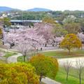 Photos: 桜の時期、水の塔から見下ろした落合公園(2015/4/7)No - 32