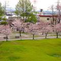 写真: 桜の時期、水の塔から見下ろした落合公園(2015/4/7)No - 42