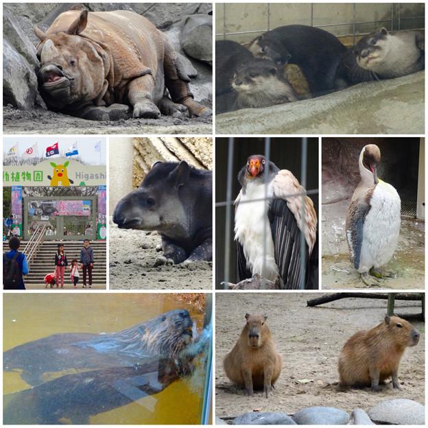 東山動植物園の様々な動物たち - 3