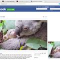 写真: Opera 37:Facebookでもビデオポップアプトが可能 - 1