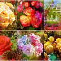 鶴舞公園:様々な色のバラ(2016年5月15日)- 9(フィルター)