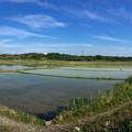 写真: 田植えが終わった、近所の田んぼ - 1(パノラマ)