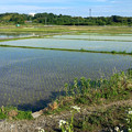 写真: 田植えが終わった、近所の田んぼ - 2