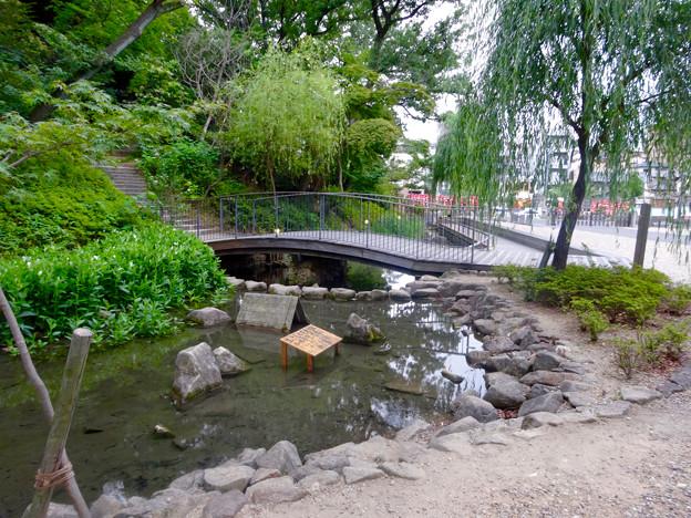 興正寺(興正寺公園) - 33:参道横のビオトープ