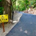 写真: 大高緑地に「ディノアドベンチャー名古屋」がプレオープン! - 82:コース内の下り坂の注意書き