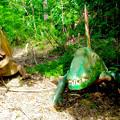 写真: 大高緑地に「ディノアドベンチャー名古屋」がプレオープン! - 86:ディメトロドン