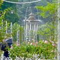 満開なバラ越しに見た、鶴舞公園の噴水 - 1