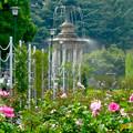 満開なバラ越しに見た、鶴舞公園の噴水 - 2